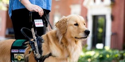 Служебные собаки – породы от больших до маленьких для службы человеку