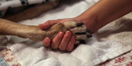 Эвтаназия собак