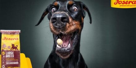 Корм Josera для собак: отзывы и описание
