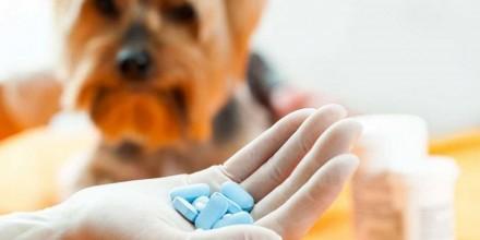 Как выбрать витамины для собак