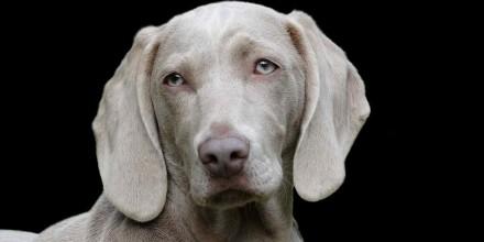 Немецкие породы собак – характеристики и фото