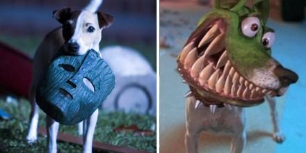 Собака из фильма «Маска»