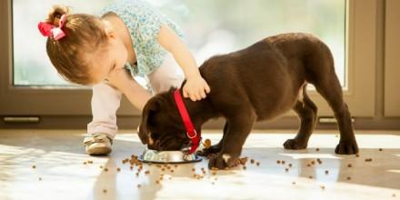 Готовы ли Вы купить щенка?
