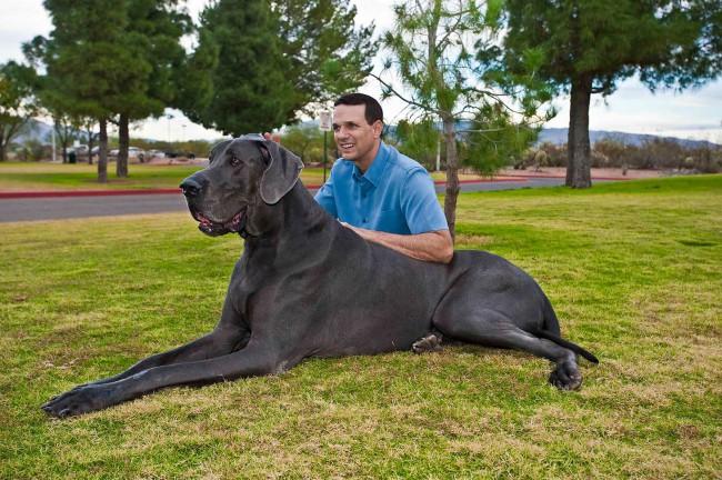 самая большая собака название породы
