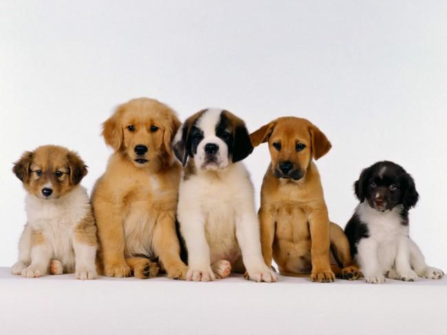 какого щенка выбрать