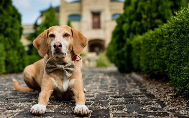 Как определить своего щенка? Как выбрать щенка из помета