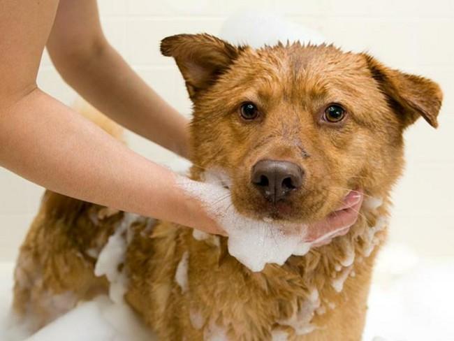 сколько раз мыть собаку