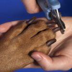 как подстричь когти щенку