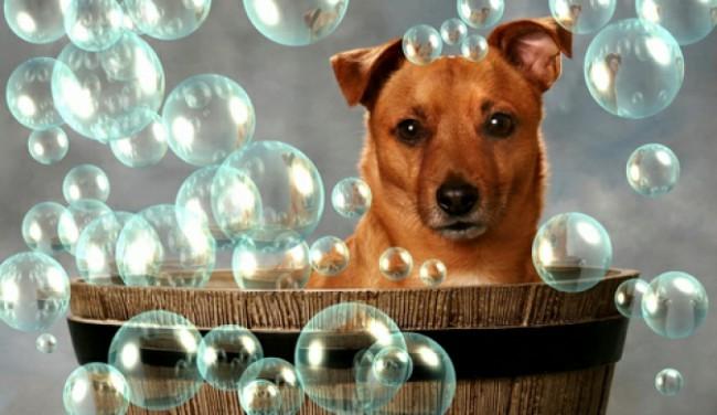 чем мыть собаку