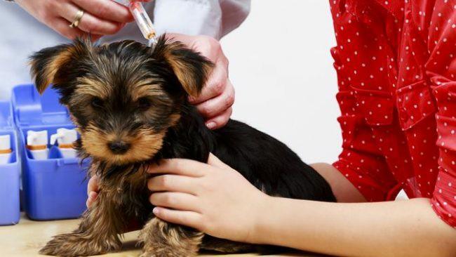 график вакцинации собак