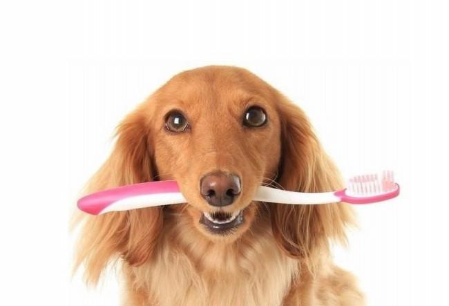 как правильно чистить собаке зубы