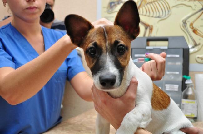 Лишай у собак: симптомы, как лечить, фото и видео
