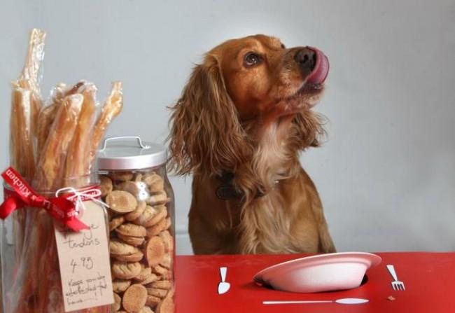 чем кормить собаку при поносе