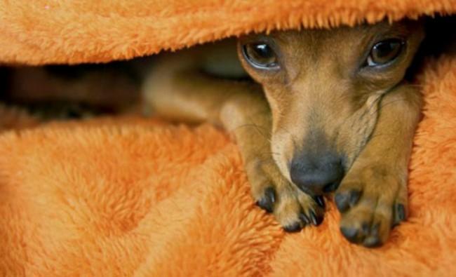 симптомы чумки у собак