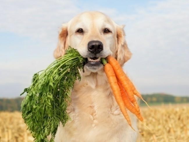 как кормить взрослую собаку натуралкой