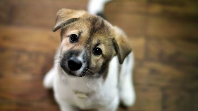 русские имена и клички для собак мальчика и девочки