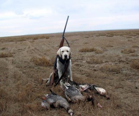 охотничьи собаки краткое описание