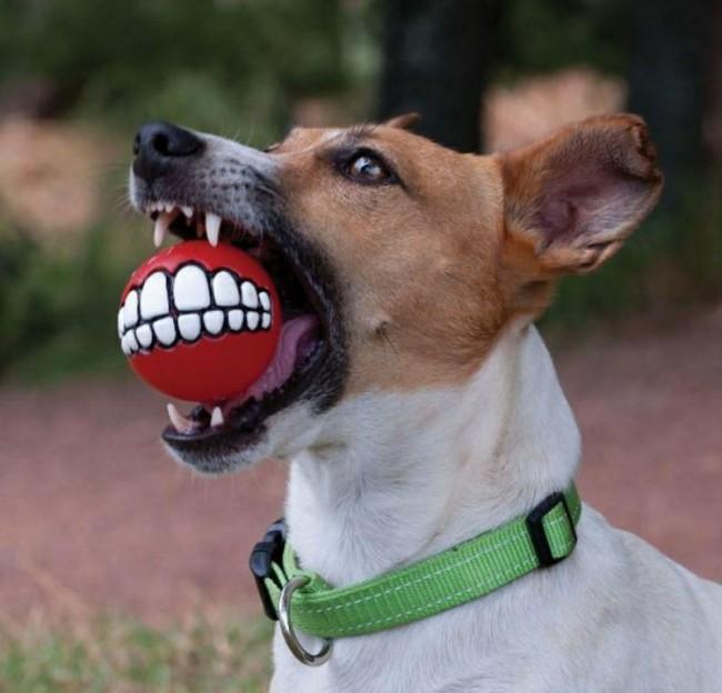 собака из маски фото