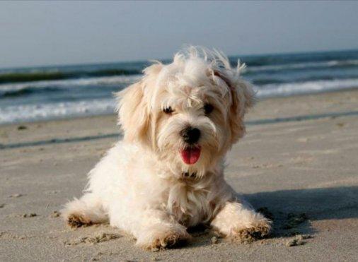 Собака с натуральными волосами