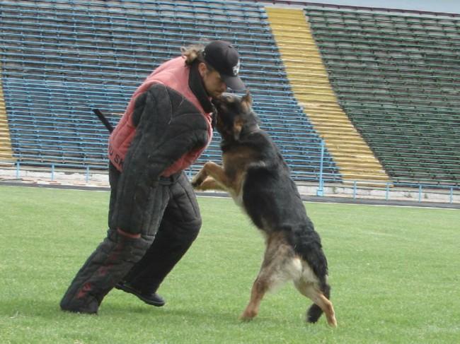 Как научить собаку команде чужой