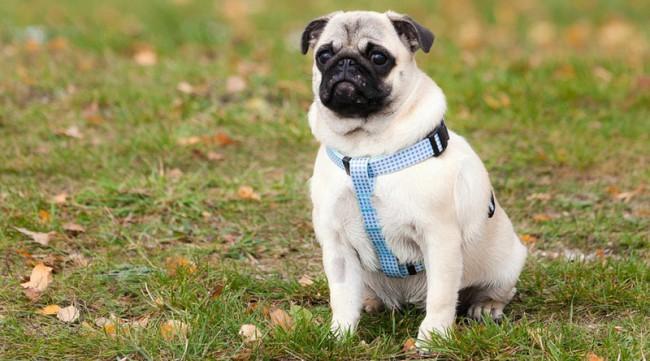 Как научить собаку команде ждать