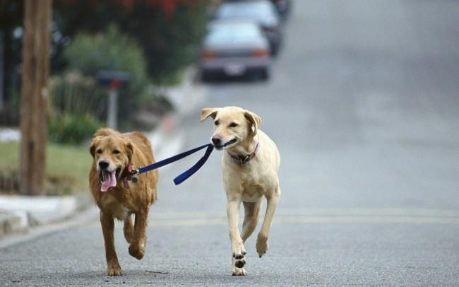 Как научить собаку команде гуляй