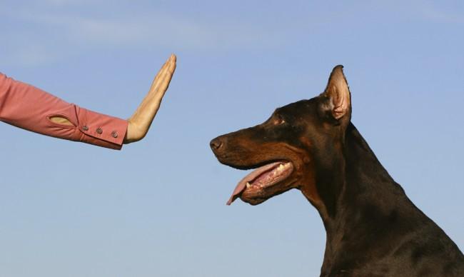 Как научить собаку команде фу и нельзя