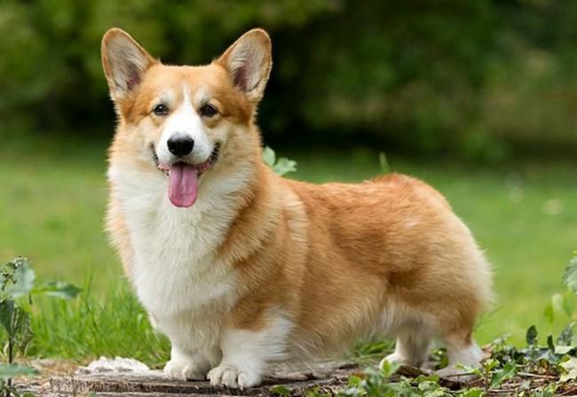 собаки которые любят детей породы