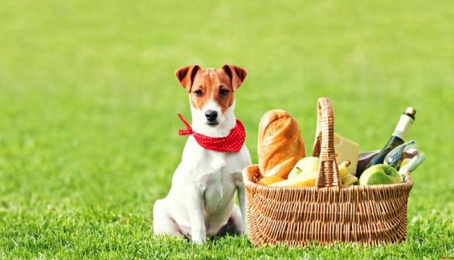 Чем кормить джек рассел терьера щенка и взрослую собаку