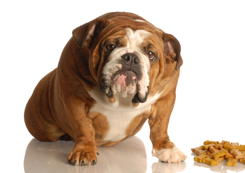 Сухие корма для собак рейтинг