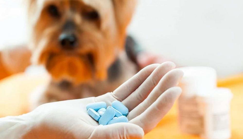Витамины для собак
