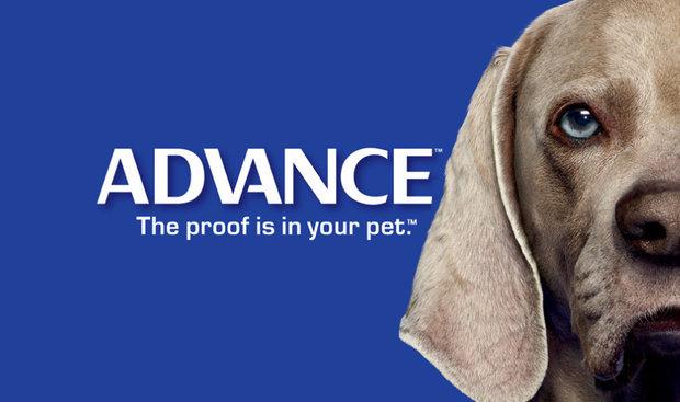 корм Advance для собак фото