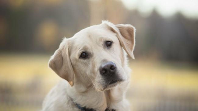 гельминтозы у собак и щенков