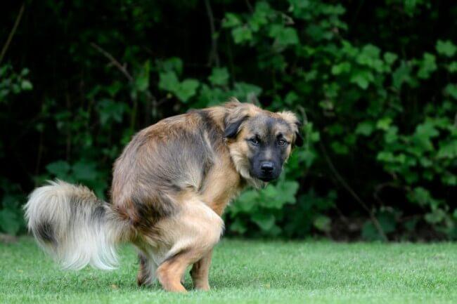 понос у собак и щенков