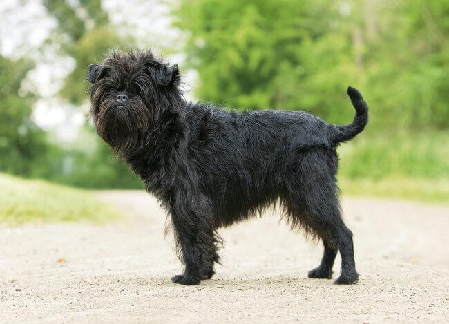 породы черных собак фото