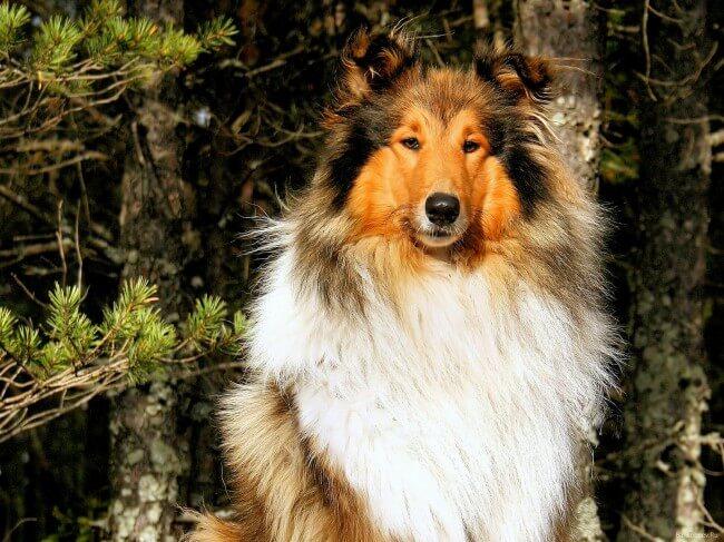 Милые породы собак с фотографиями