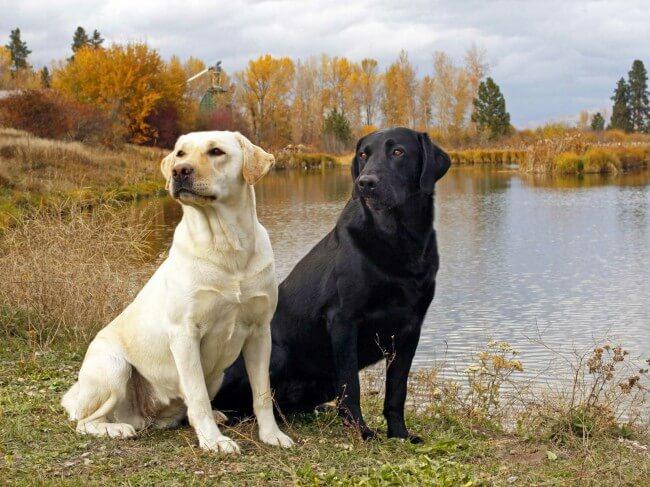 Топ самых красивых пород собак