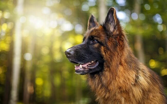 Красивые и умные породы собак