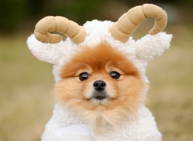 Самые красивые породы собак в мире с фото и описанием