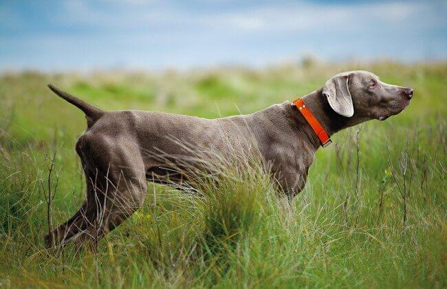 Очень красивые породы собак