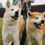 Японские породы собак (Топ-14 пород)