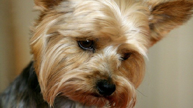все о отеке легких у собак