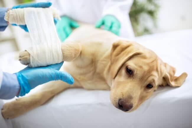 симптомы артрита у собаки