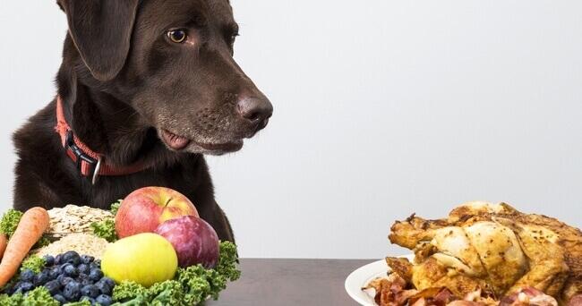 панкреатит у собак: симптомы, причины и лечение