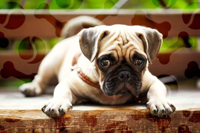 чем кормить собаку при панкреатите