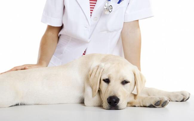 плюсы и минусы стерилизации собак
