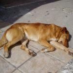 симптомы и лечение эпилепсии у собак