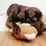 микоплазмоз у собаки - схема лечения