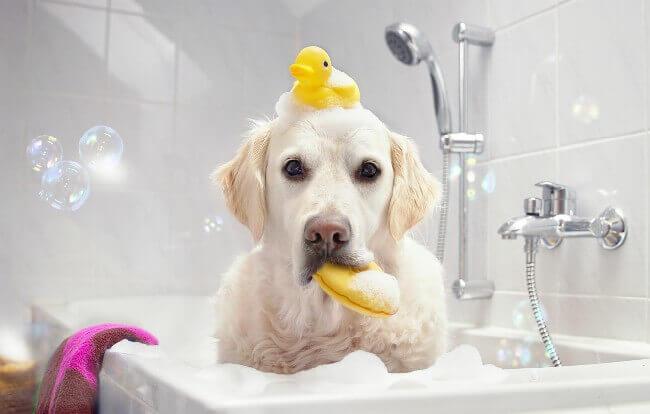 сухой шампунь для собак