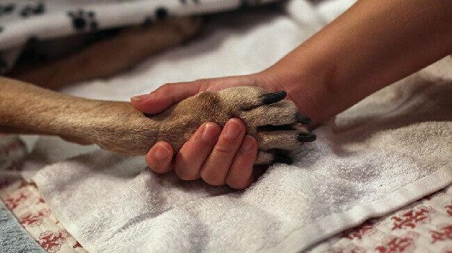 как усыпить собаку правильно